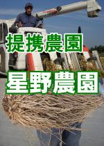 提携農園 星野農園 アスパラガスの苗 特別栽培一等米コシヒカリ